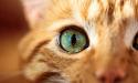 Ojos de Gato