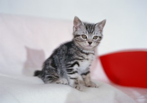 Gatito en su nuevo hogar