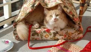 Camas para gatos - Ventana