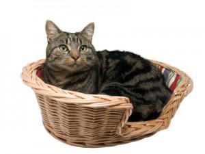 Camas para gatos - Cestas
