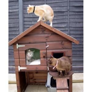 casas para gatos en exterior accesorios para gatos