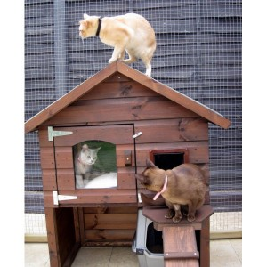 Casa gatos exterior