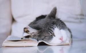 Diario de un gato