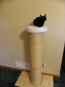 Rascadores caseros para gatos