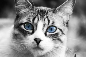 Curiosidades de la fisiología del gato