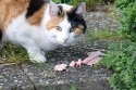 Alimentacion del gato según su edad
