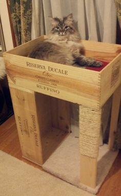 Camas Para Gatos Caseras Accesorios Para Gatos Wikigato