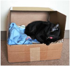 Cama para gatos casera