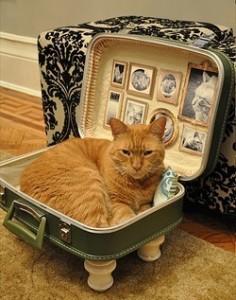 Gato en maleta