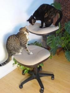 Gatos en silla