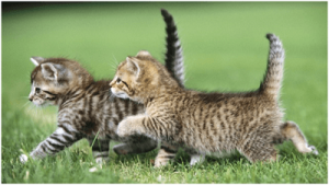 La orientación de los gatitos