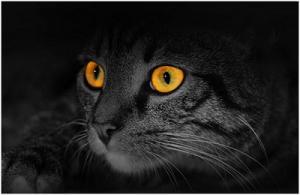 La vista del gato