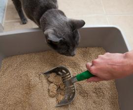 Limpiando arena para gatos