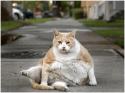 Gato con tendencia a engordar