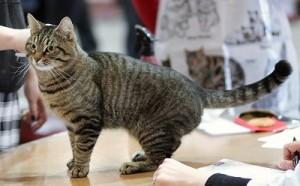 Exposición de gatos