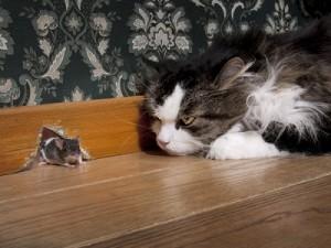 Gato acechando una presa