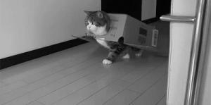 Gato en caja de carton
