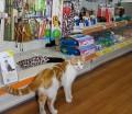 Gato en tienda de animales II