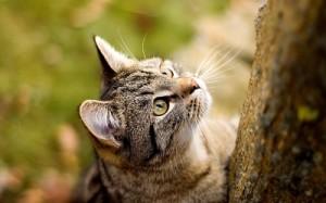 Gato romano cazando