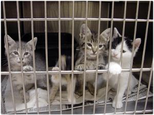 Gatos en tienda de animales