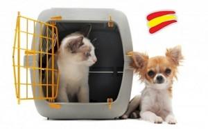 Protección animal España
