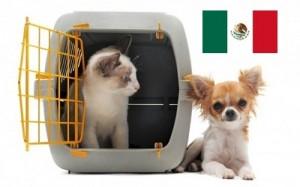 Protección animal México