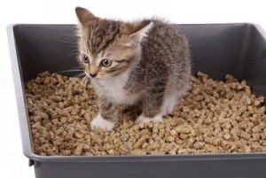 Entrenando a tu gatito