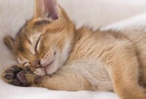 Gatito siesta