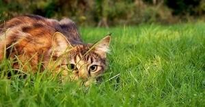 Gato en el exterior