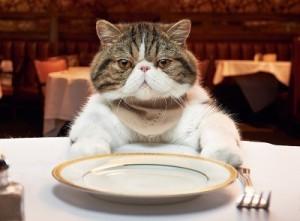 Gato en restaurante