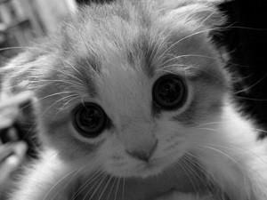 Características del gato