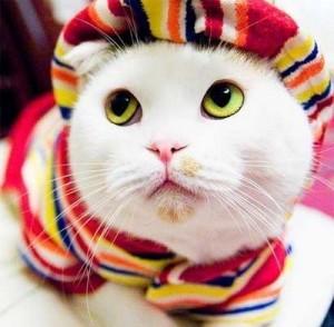 Ropa para gatos (1)