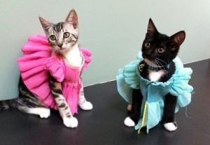 Ropa para gatos (3)