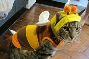 Ropa para gatos (5)