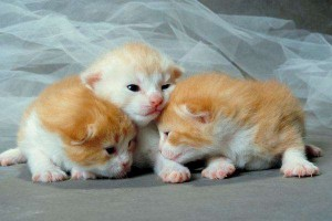 Gatitos recien nacidos