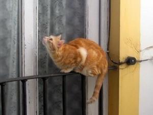 Gato en balcón
