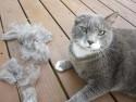 Bolas de pelo y gato