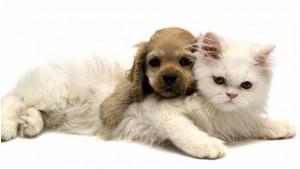 Perrito y gato