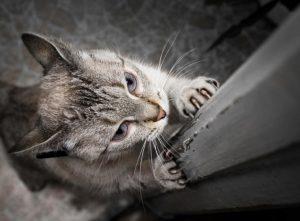 Gato rascando