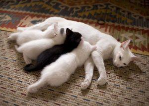 destete gatitos