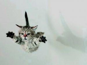 vidas gato